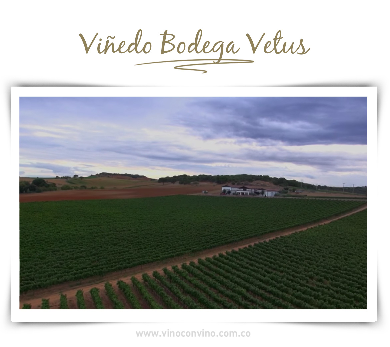 Viñedo Bodega Vetus