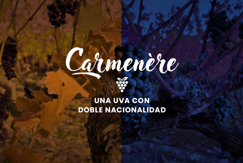 Carmenère. Una uva con doble nacionalidad