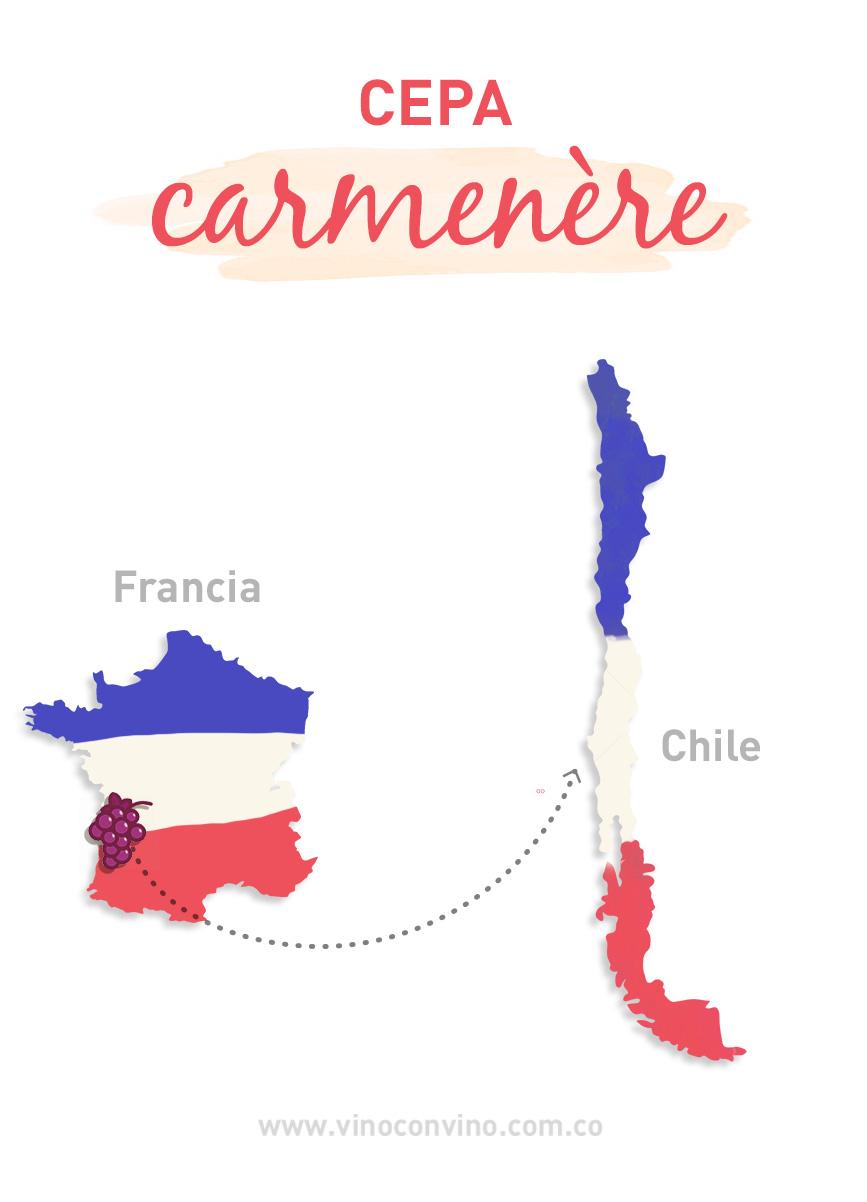El viaje de la cepa Carmenèr