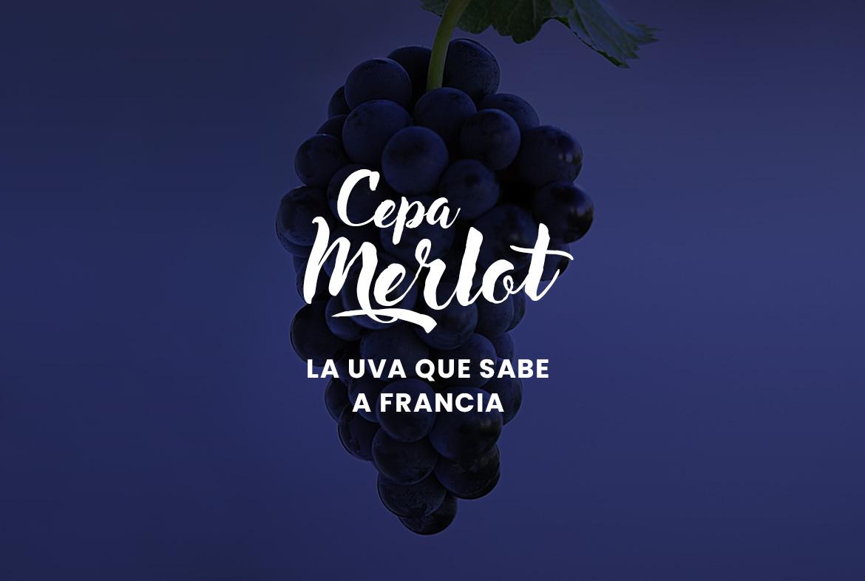 Merlot: La uva que concentra el sabor y la esencia mágica de Francia