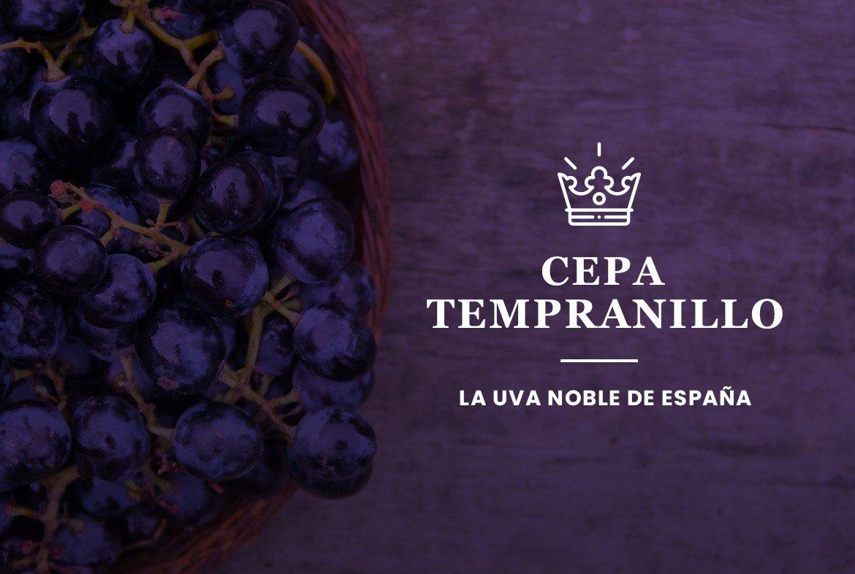 Cepa tempranillo, la uva noble de España