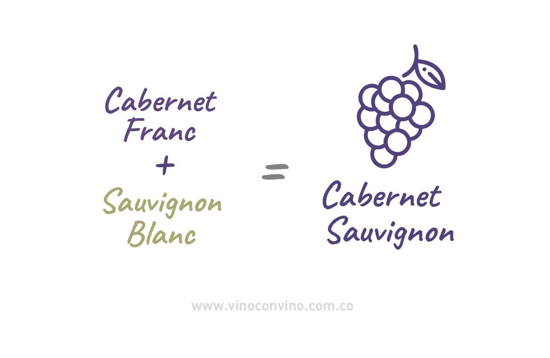 A qué sabe un cabernet sauvignon