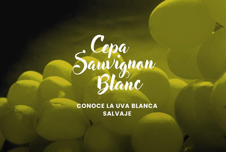 Cepa Sauvignon Blanc - La uva blanca salvaje - blog vinoconvino