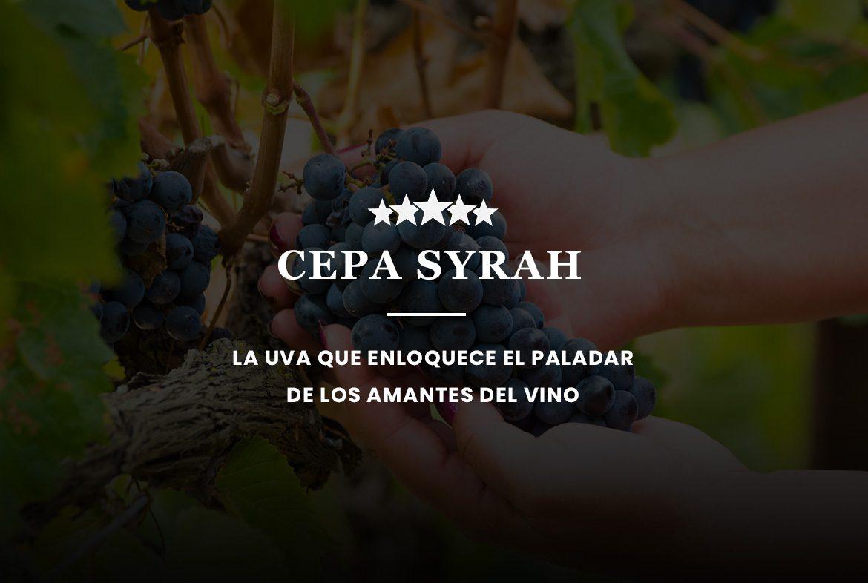 Cepa Syrah-blog vino con vino