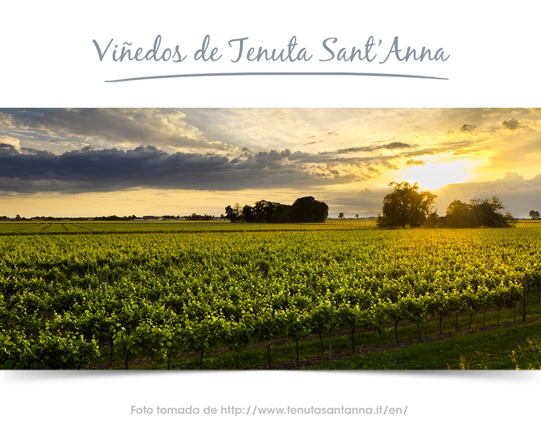 Viñedos de Prosecco Tenuta Sant'Anna Extra Dry-Blog vino con vino