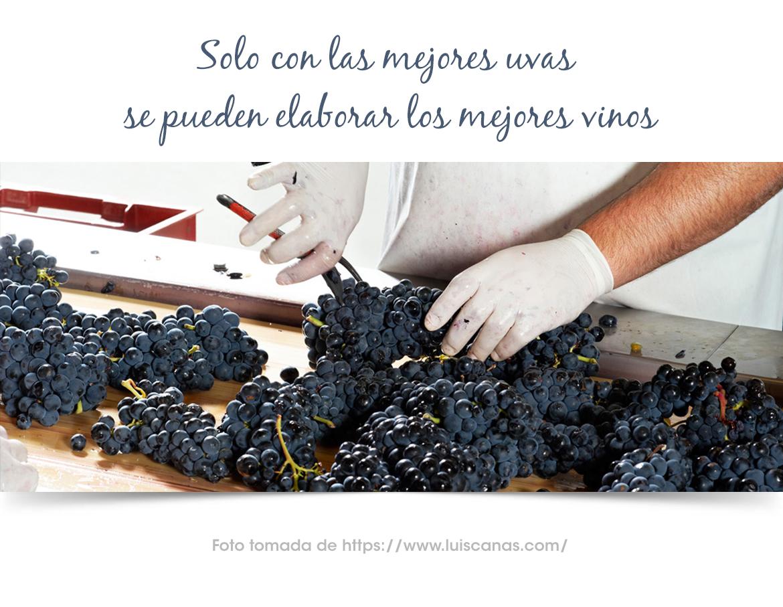 Bodega Luis Cañas Crianza- Blog vino con vino