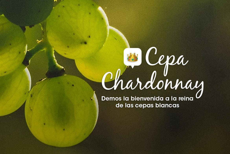Cepa Chardonnay-la reina de las blancas