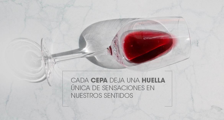 ¿Qué es una cepa de vino?